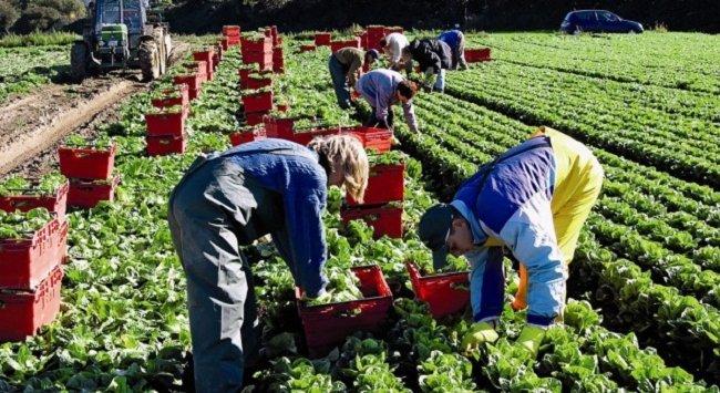 Польша хочет обложить налогом всех сезонных рабочих из Беларуси
